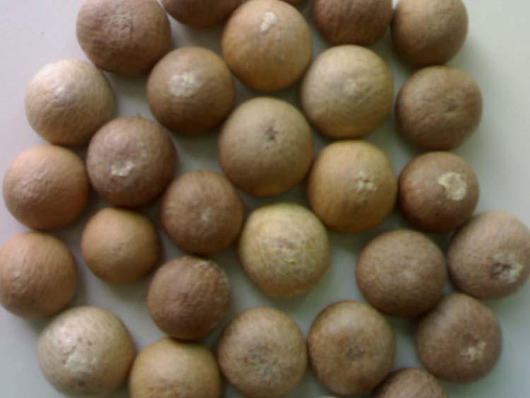 Betel Nut (Noix de bétel)