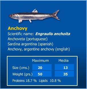 Anchovies (Анчоусы)