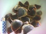 Operculum (Крышечки)