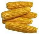 Corn (Maïs)