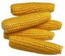 Corn (Кукуруза)