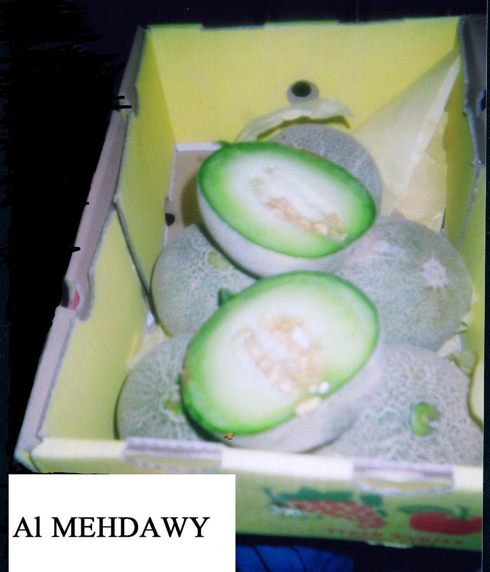 Cantaloupe (Cantaloup)