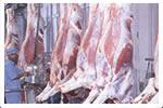 Buffalo Carcass (Buffalo Carcass)