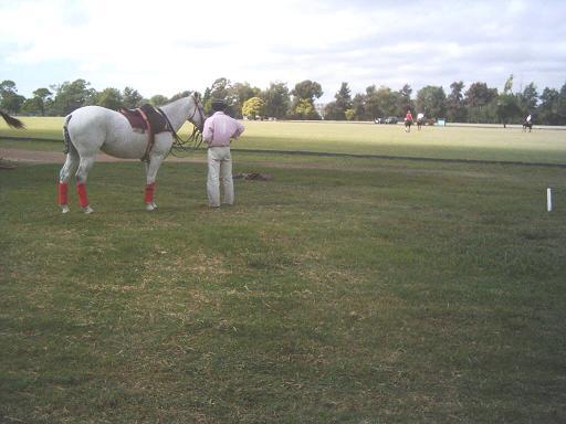 Polo Horses (Поле Лошади)