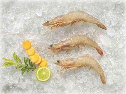 Shrimp (Креветки)