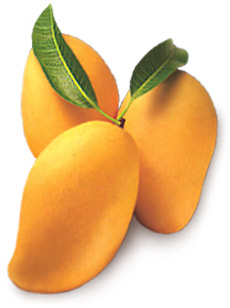 Mangos (Mangos)