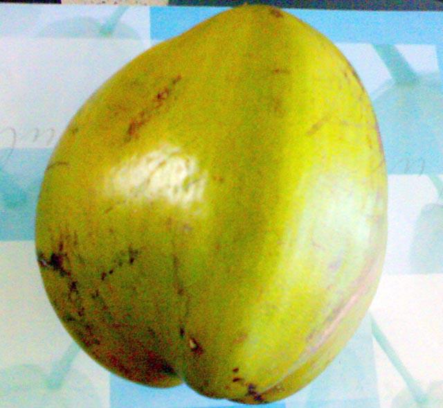 Coconut (Кокосовое)