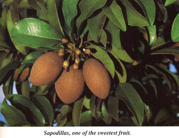 Suppotta Fruit (Suppotta фрукты)
