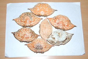 Crab Shell (Краб Shell)