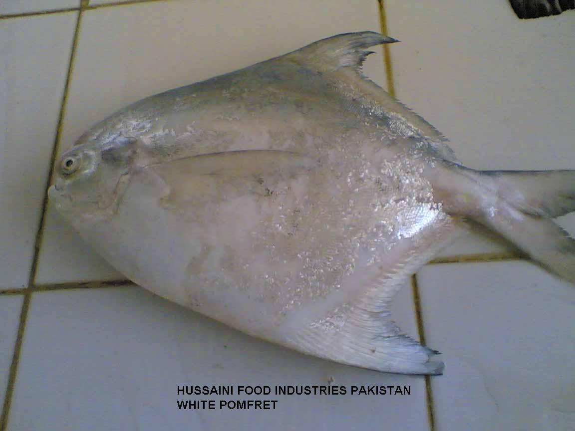 Fresh Fish (Свежая рыба)