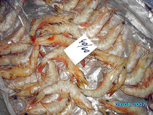 Hoso White Shrimps (Хосо Белые креветки)