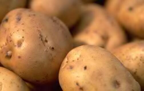 Potato (Картофель)