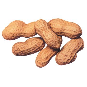 Roasted Peanut (Жареного арахиса)