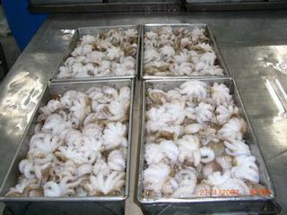 Block Frozen Octopus (Блок замороженных осьминогов)