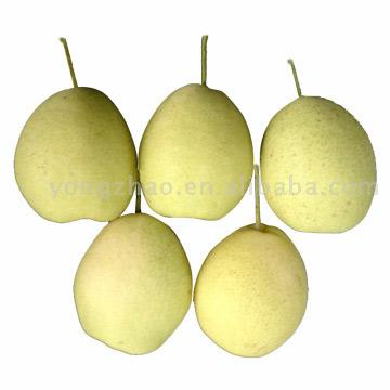 Chinese Fresh Pear (Китайский свежей груши)
