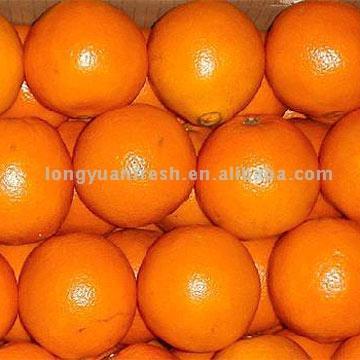 Navel Orange (Пуп Оранжевый)