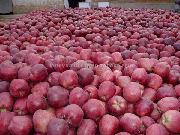 Huaniu Apple (Huaniu Apple)