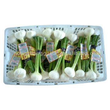Fresh Pure White Garlic (Свежий Чистый белый чеснок)