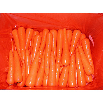 Shandong Carrot (Шаньдун Морковь)
