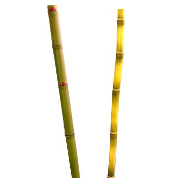 Artificial Bamboo (Искусственный Бамбук)