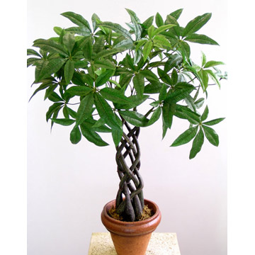 Artificial Plant With Pot (Искусственные растения с горшком)