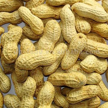 Roasted Peanuts in Shell (Жареного арахиса в Shell)