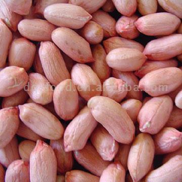 Peanut Kernels (Long Type) (Ядра арахиса (Лонг-Type))