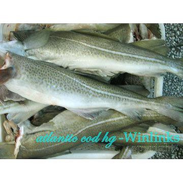 Frozen HG Raw Fish (Frozen HG Raw Fish)