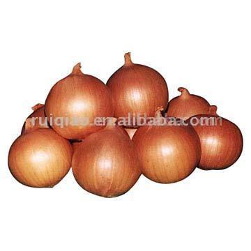 Fresh Red (Yellow) Onion (Свежий красный (желтый) лук)