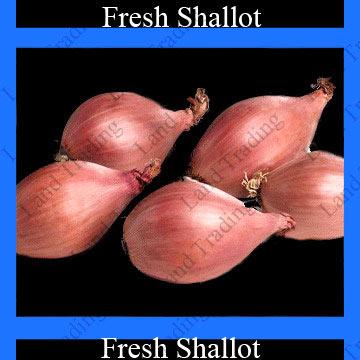 Fresh Shallot (Fresh Échalote)