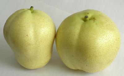 Su Pears (Су Груши)