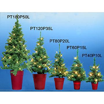 Pine Tree (Pine Tr)