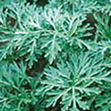 Artemisinin (Артемизинин)