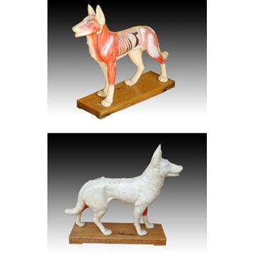 Dog Acupuncture Model (Собака акупунктуры модели)