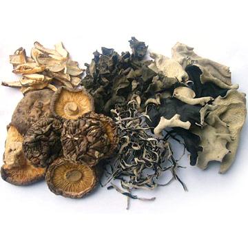 Mushroom & Agaric