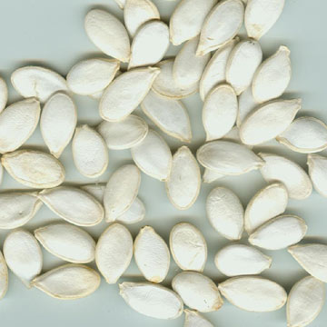 Snow White Pumpkin Seed