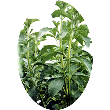 Glucosylstevioside (Enzyme Modified Stevia)