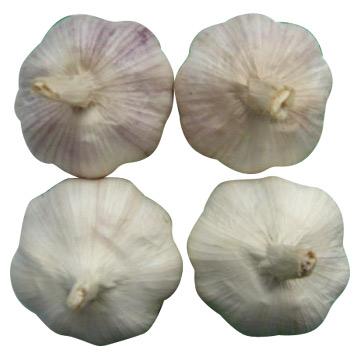 Garlic (Чеснок)