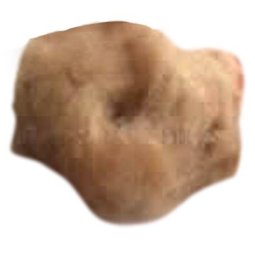 Camel`s Hair