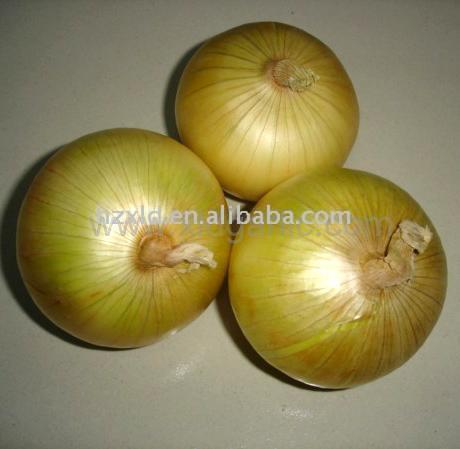 Fresh Onion (Свежего лука)