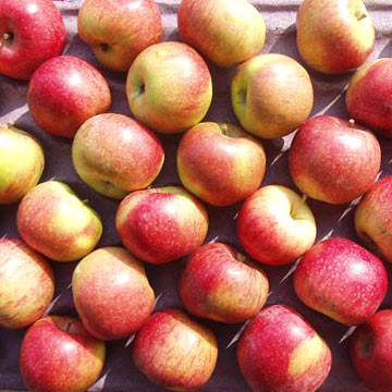 Jiguan Apple (Jiguan Apple)