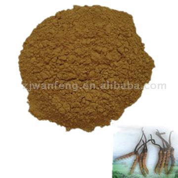 Cordyceps Cephalosporium Mycelia
