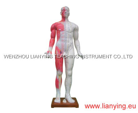 Body Model for Both Meridian and Extraordinary Points