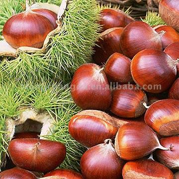 Chestnut (Каштан)