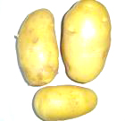 Holland Potato