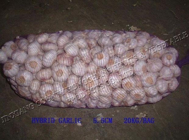 Normal White Garlic (Нормальный белый чеснок)
