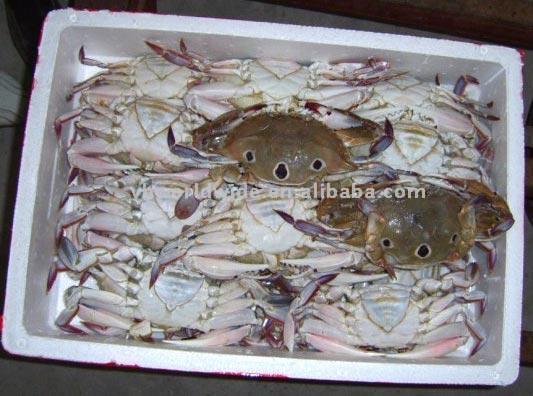 Crab (Краб)