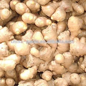 China Ginger (Китай Ginger)