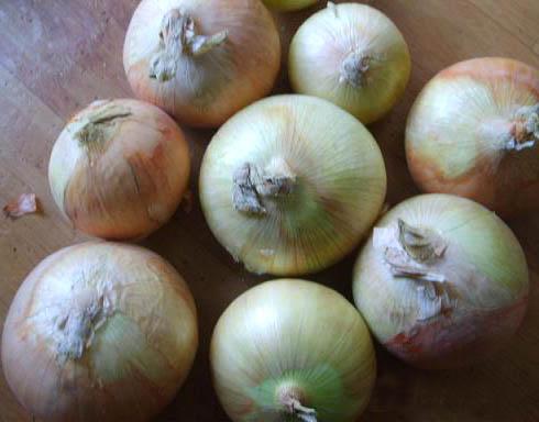 Fresh Red/Yellow Onion ( Fresh Red/Yellow Onion)