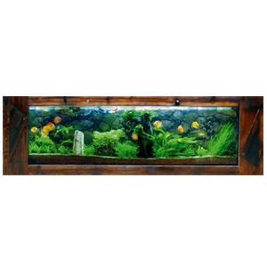 Hang Wall Aquariums